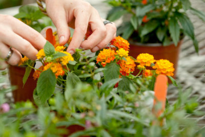 Free Horticulture Course – 1 Day Per Week